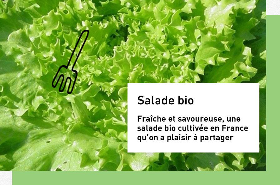 salade-bio-batavia-marche-bio_1