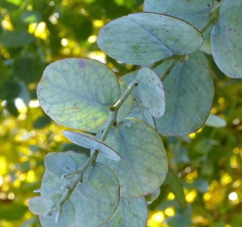 Tisanes, huiles essentielles : la thérapie par les plantes
