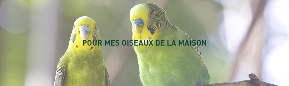 grain-de-vie_20