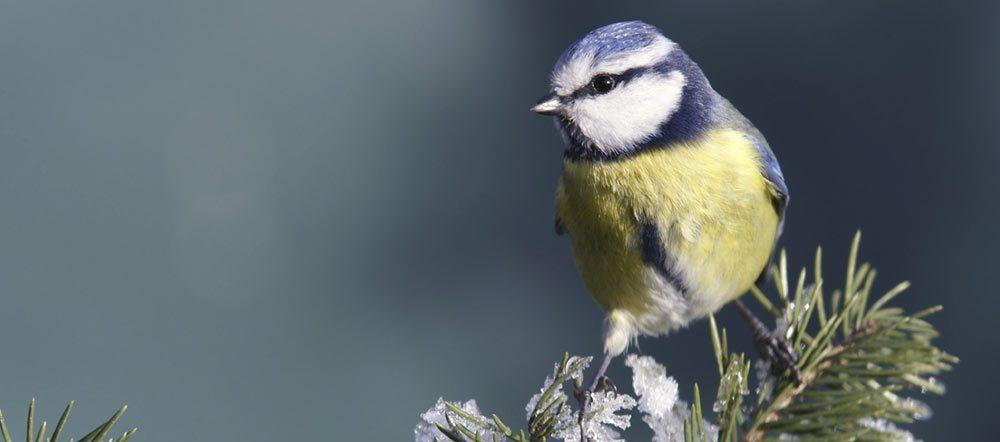 les-oiseaux-de-nos-jardins_1