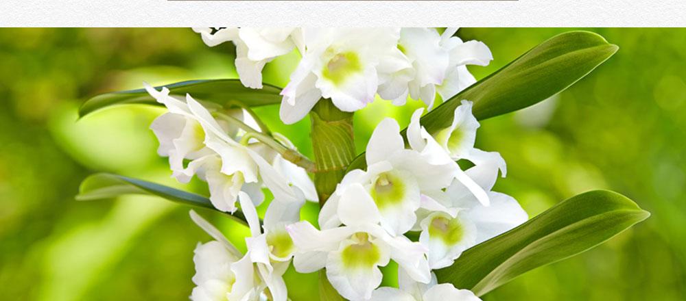 semaine-de-l-orchidee_9