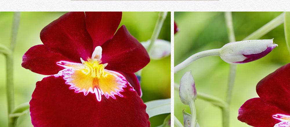semaine-de-l-orchidee_11