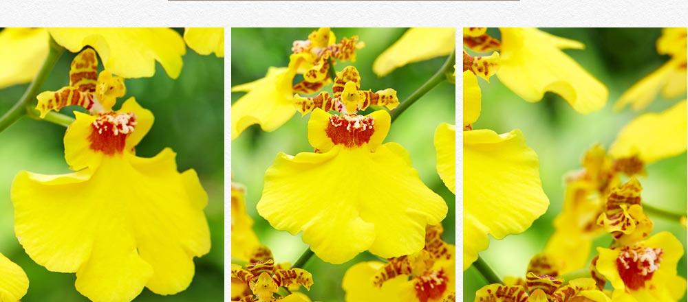 semaine-de-l-orchidee_12