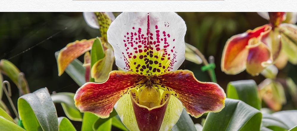 semaine-de-l-orchidee_13