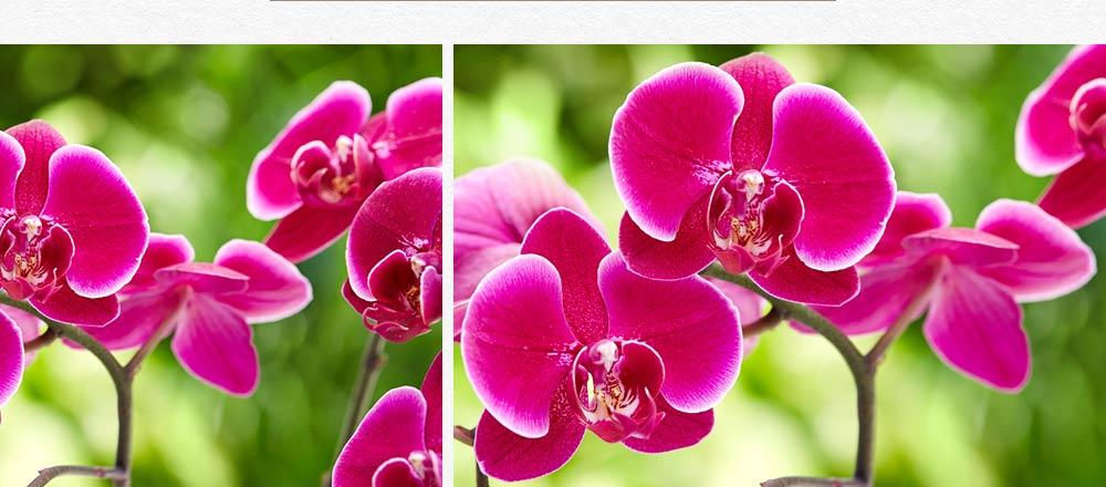 semaine-de-l-orchidee_14