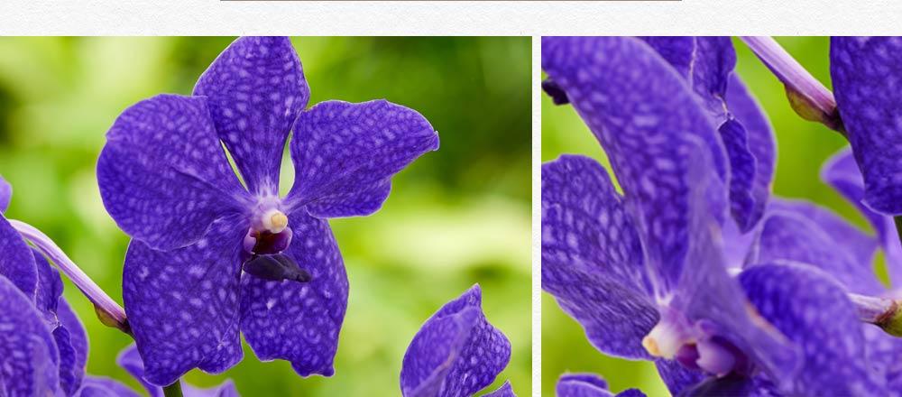semaine-de-l-orchidee_15