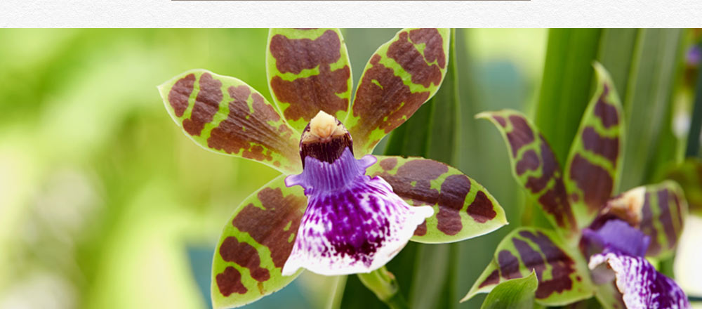 semaine-de-l-orchidee_16