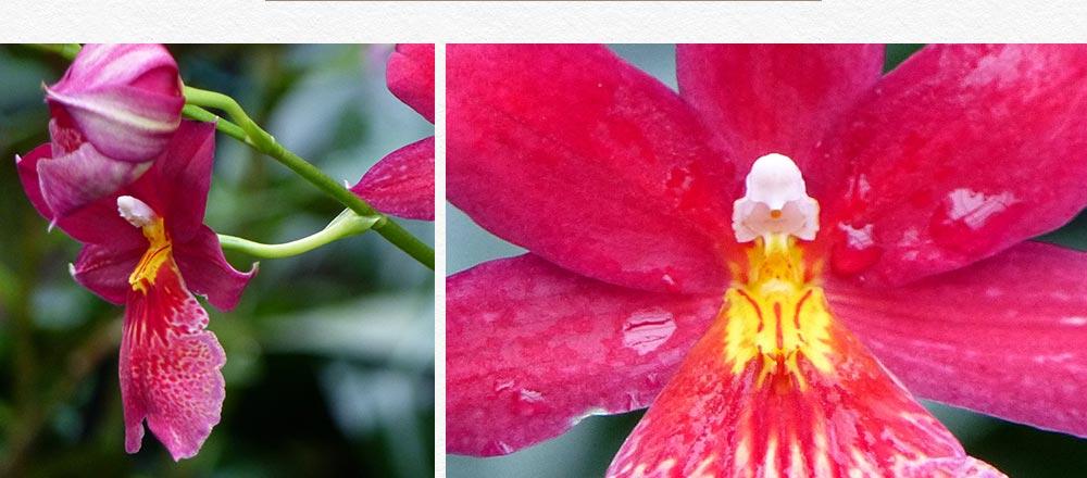semaine-de-l-orchidee_6