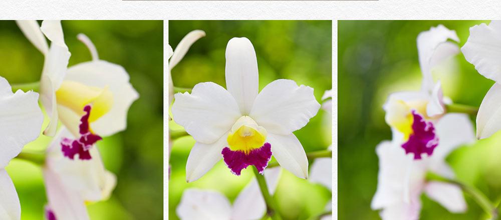 semaine-de-l-orchidee_7
