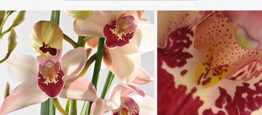 semaine-de-l-orchidee_8