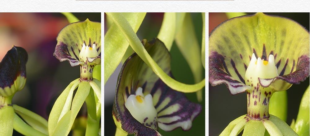 semaine-de-l-orchidee_10