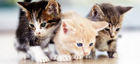 chiot-ou-chaton-une-nouvelle-boule-de-poils-a-la-maison_3