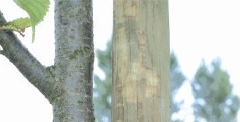 comment-planter-votre-arbre-fruitier_6