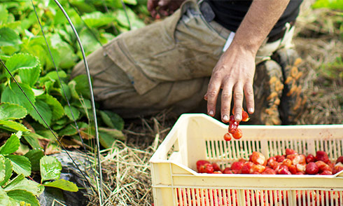 jardinons-mangeons-et-vivons-au-naturel_3