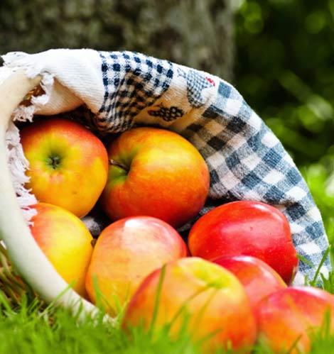 la-monodiete-de-pommes_3