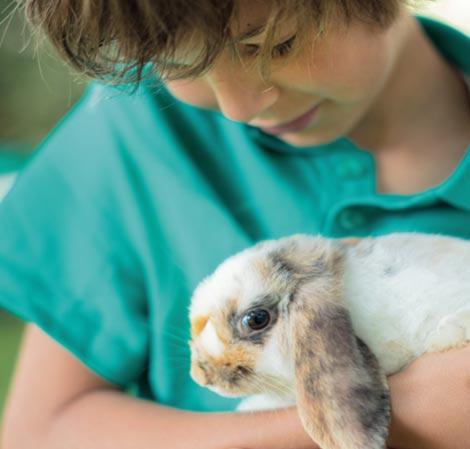 lapins-de-jardin_4