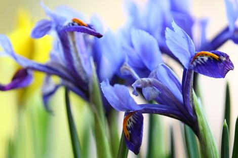 les-bulbes-de-printemps_2_1