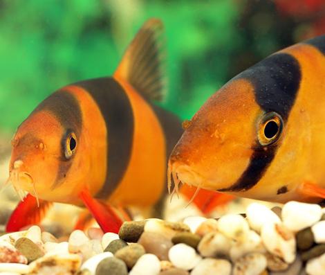 mon-premier-aquarium_3