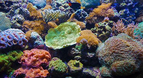 Mon premier aquarium conseil animalerie botanic botanic for Aquarium botanic