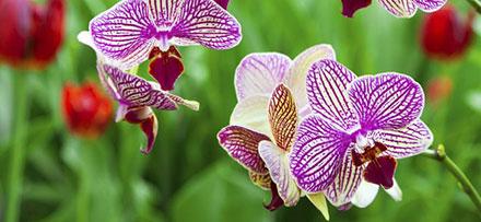prendre-soin-de-son-orchidee_2