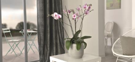 prendre-soin-de-son-orchidee_3