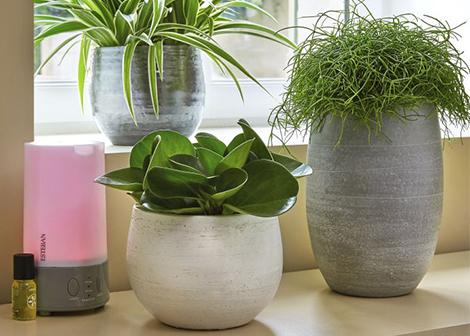 un esprit sain dans une maison saine focus sur les parfums d 39 int rieur botanic. Black Bedroom Furniture Sets. Home Design Ideas