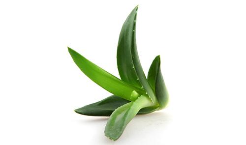 Une plante mystérieuse aux vertus indéniables !