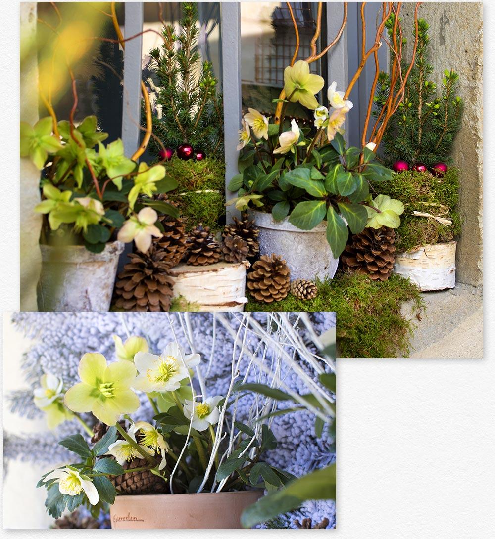 ambiance de no l ext rieur botanic. Black Bedroom Furniture Sets. Home Design Ideas