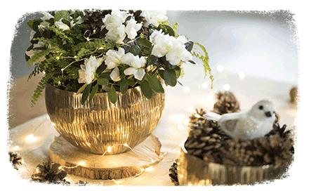Ambiance de Noël : Nature Pastel