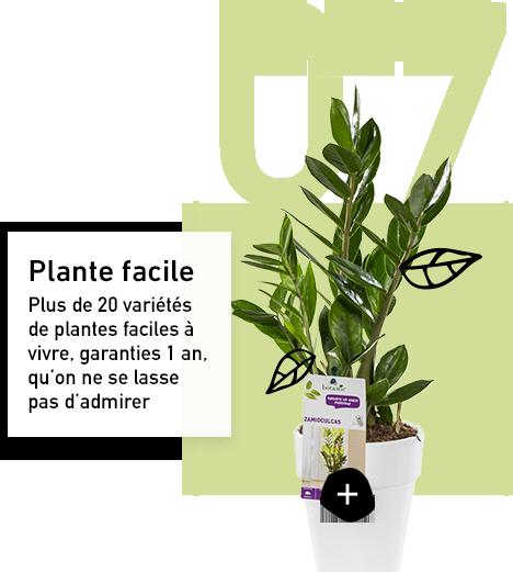 Plante facile