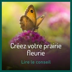 creez-votre-prairie-fleurie