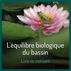 l-equilibre-biologique-du-bassin
