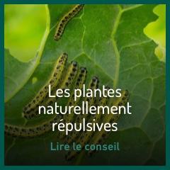 les-plantes-naturellement-repulsives