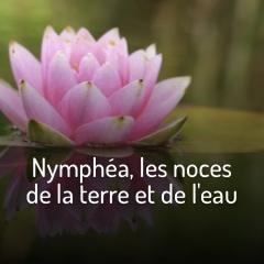 nymphea-les-noces-de-la-terre-et-de-l-eau