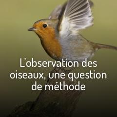 observer-les-oiseaux