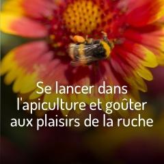se-lancer-dans-l-apiculture