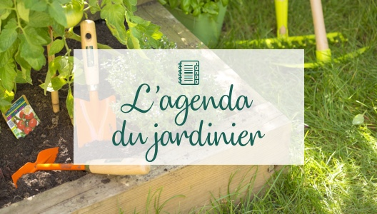 Ma to-do list de juillet