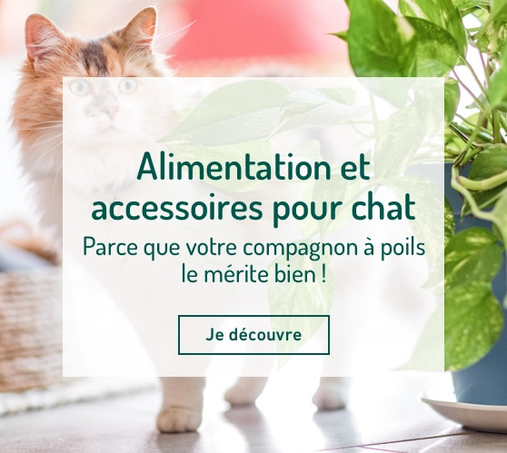 Edito_alimentation-et-accessoires-chat