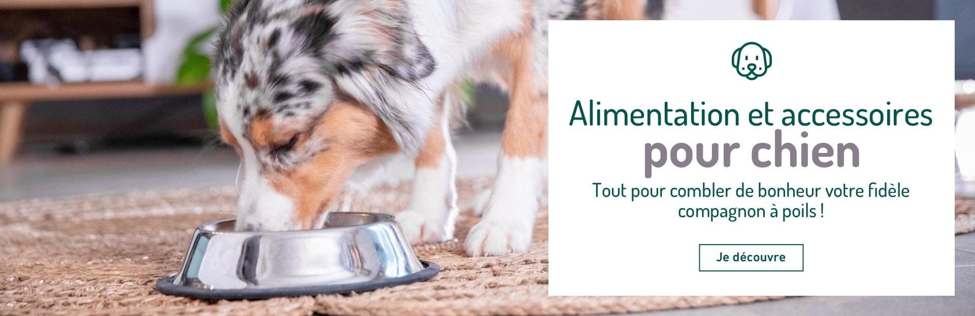 Alimentation et accessoires pour chien