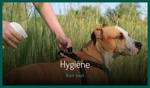 Hygiène et soin du chien