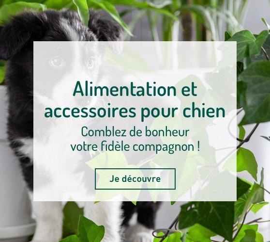 Edito_alimentation-et-accessoires-chien