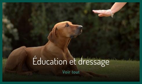 Sécurité et éducation du chien