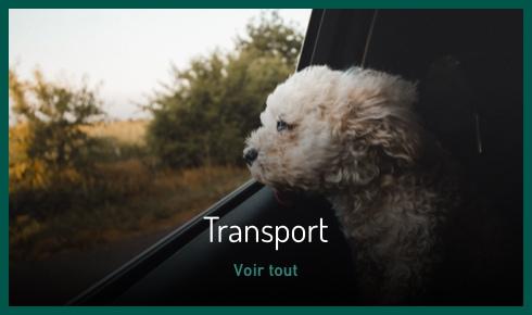 Transport pour chien