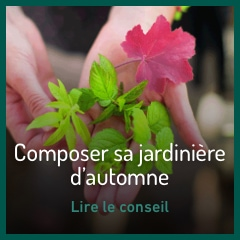 composer-sa-jardiniere-d-automne