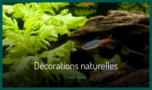 Décoration naturelle
