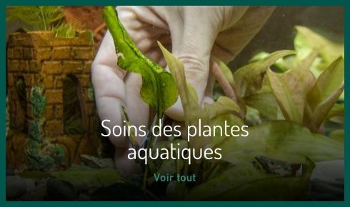 Soin des plantes aquatiques