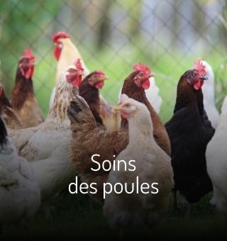 Soin des poules