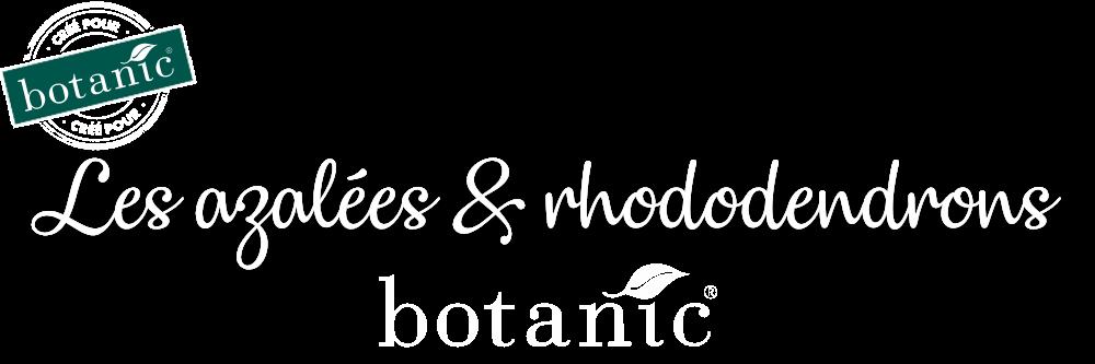 azalees-et-rhododendron-botanic_5