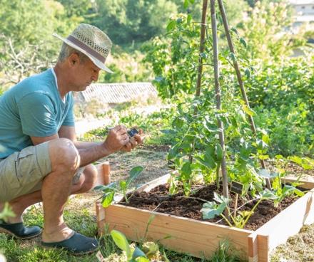 homme jardinant