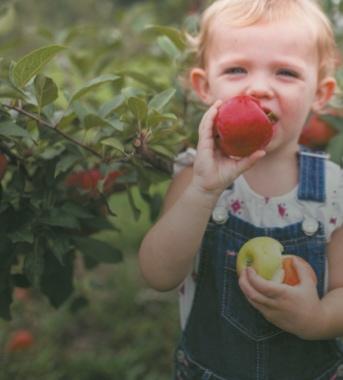 bebe mange une pomme